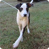 Adopt A Pet :: Ace - Warrenton, NC