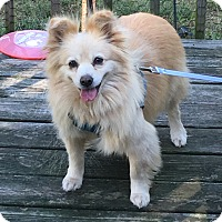 Adopt A Pet :: Monica - Wyanet, IL
