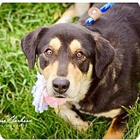 Adopt A Pet :: Mandy - Urgent! - Zanesville, OH