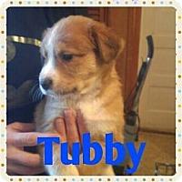 Adopt A Pet :: Tubby - Wichita Falls, TX
