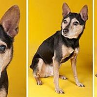 Adopt A Pet :: Tyson - Chicago, IL