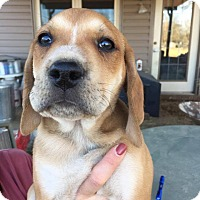 Adopt A Pet :: COME MEET Ty - Westport, CT
