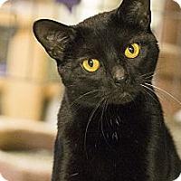 Adopt A Pet :: Sammy - Lombard, IL