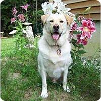 Adopt A Pet :: Reegen - in Maine! - kennebunkport, ME