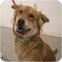 Adopt A Pet :: Heidi - Phoenix, AZ