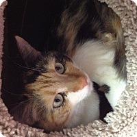 Adopt A Pet :: Carli - Phoenix, AZ