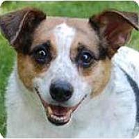 Adopt A Pet :: Zippy - Cleveland, OH