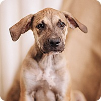 Adopt A Pet :: Tanner - Portland, OR