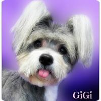 Adopt A Pet :: GiGi - Pascagoula, MS