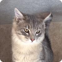 Adopt A Pet :: Iron - Colorado Springs, CO