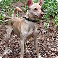 Adopt A Pet :: Buddy - Saratoga, NY