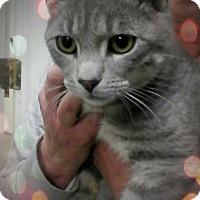 Adopt A Pet :: Rockwood - Trevose, PA