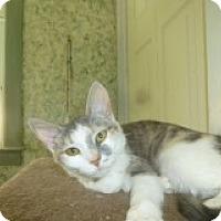 Adopt A Pet :: Mootsie - Manchester, CT