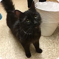 Adopt A Pet :: Deidre - Arlington/Ft Worth, TX