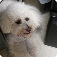 Adopt A Pet :: Louie - Muskegon, MI