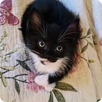 Adopt A Pet :: Reid - Ocala, FL
