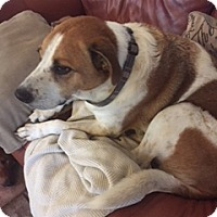 Adopt A Pet :: Tex - Kingwood, TX