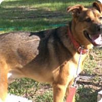 Adopt A Pet :: Deisel - Brooksville, FL