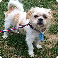 Adopt A Pet :: Skeeter meet me 9/9 - Manchester, CT