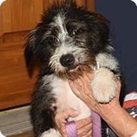 Adopt A Pet :: Xena - Washington, DC