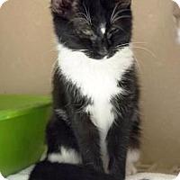 Adopt A Pet :: Velma $20 - Lincolnton, NC