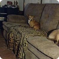 Adopt A Pet :: Nick - Bartlett, TN