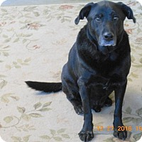 Adopt A Pet :: Dudley - Alstead, NH