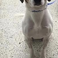 Adopt A Pet :: Jimmy - Sayville, NY