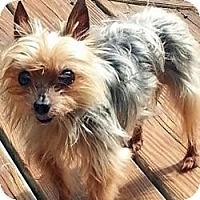 Adopt A Pet :: Tex - Suwanee, GA