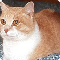 Adopt A Pet :: Orange - N. Berwick, ME