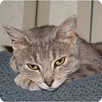 Adopt A Pet :: Abby REDUCED - crofton, MD