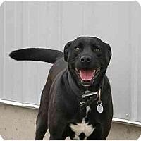 Adopt A Pet :: Crash - Meridian, ID