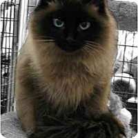 Adopt A Pet :: Avalon - Davis, CA