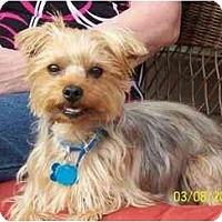 Adopt A Pet :: Rascal - Conroe, TX