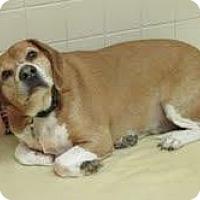 Adopt A Pet :: Sake - Phoenix, AZ