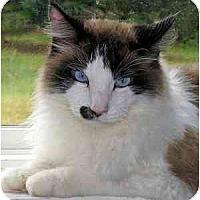 Adopt A Pet :: Lazarus - Davis, CA