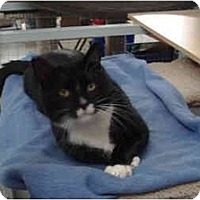 Adopt A Pet :: Tyler - Mission, BC