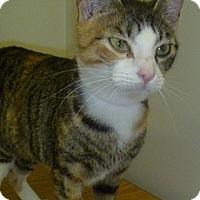 Adopt A Pet :: Libby - Hamburg, NY