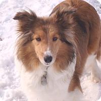 Adopt A Pet :: Dori - Circle Pines, MN