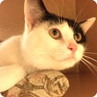 Adopt A Pet :: Reilly - Colmar, PA