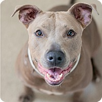 Adopt A Pet :: Lucy - Houston, TX