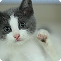 Adopt A Pet :: Eclipse - Richmond, VA