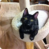 Adopt A Pet :: Brianna - Watkinsville, GA