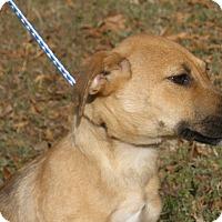Adopt A Pet :: Jack - Pewaukee, WI