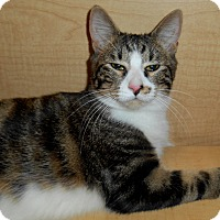 Adopt A Pet :: Foster - Chattanooga, TN