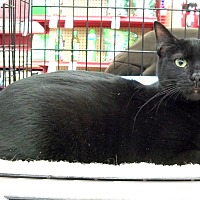 Adopt A Pet :: Flower - Sterling Heights, MI