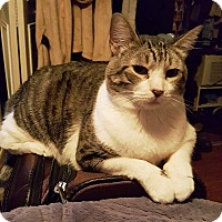 Adopt A Pet :: Baxter - Orange, CA