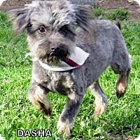 Adopt A Pet :: Dasha (Ritzy) - Lindsay, CA