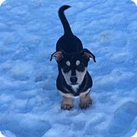 Adopt A Pet :: Loki - Saskatoon, SK