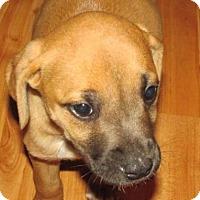 Adopt A Pet :: Justine - Rocky Mount, NC